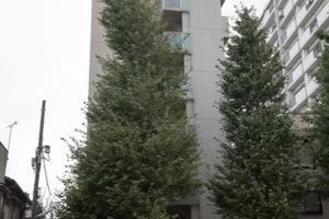 スカイコート新高円寺の外観