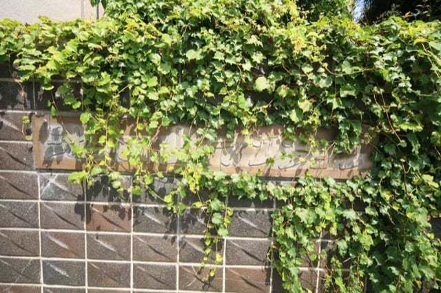 池田山マンションの看板