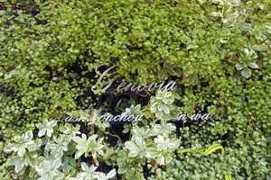 ジェノヴィア板橋本町グリーンウォールの看板