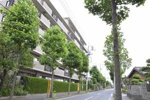 篠崎公園パインマンションの外観