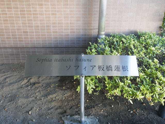ソフィア板橋蓮根の看板